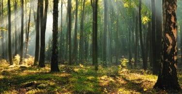 Beneficiários do RSI em Gaia vão ser vigilantes florestais