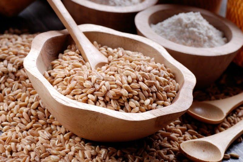 espelta - nutrição - Vida Rural