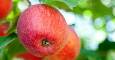 INIAV promove sessão de divulgação de fruticultura
