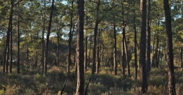 Governo define apoio máximo de 3 M€ para o Fundo Florestal Permanente