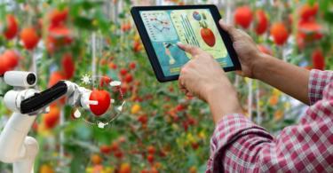 Fundão lidera consórcio para estudar aplicação da IoT na Agricultura