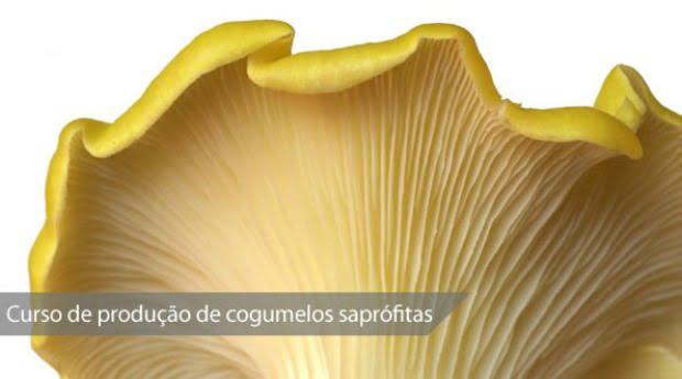 Curso de Produção de Substratos para Cogumelos Saprófitas