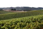Regime de produção de vinhos DOP na região de Lisboa é definido