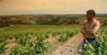 Nova marca de vinhos oferece nova abordagem às colheitas de Trás-os-Montes