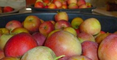 Fruta Feia quer aproveitar desperdícios dos supermercados