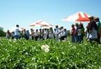 Sapec Agro promove Dias de Campo de Fruticultura e Batata