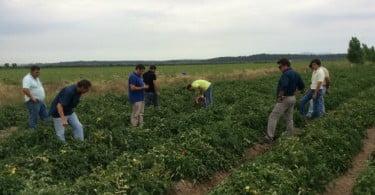 Syngenta promove Tour Tomate Indústria no Ribatejo