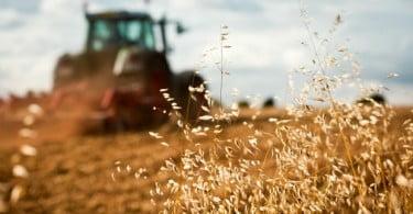 Decisões nacionais das ajudas diretas aos agricultores conhecidas