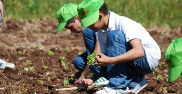 Vitacress convida famílias para colher alfaces
