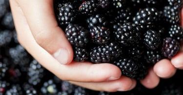 Cluster dos Pequenos Frutos já foi aprovado