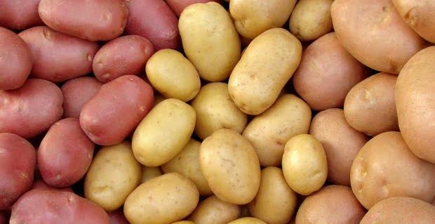 Consumidores norte-americanos dispostos a pagar mais por batatas transgénicas mais saudáveis