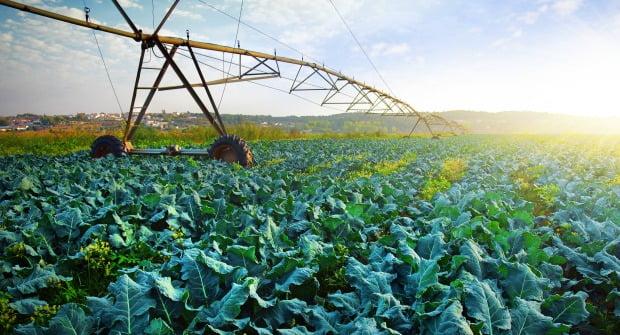 campo agricola abril  Vida Rural