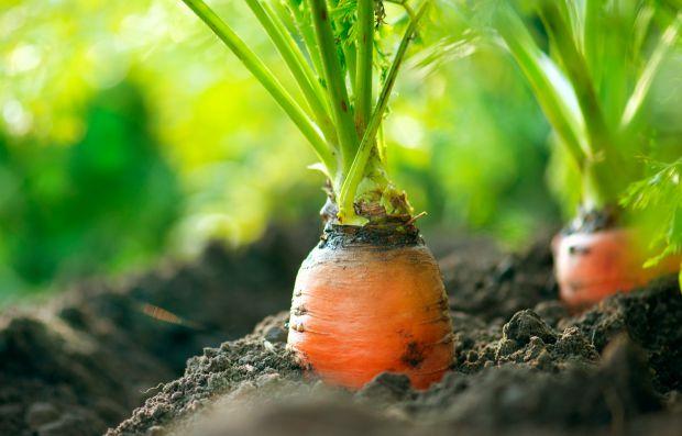 Agrobio e Vila Real vão cooperar no desenvolvimento da agricultura biológica