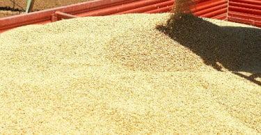Preço mundial dos cereais sobe em agosto