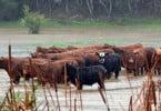 Setor agrícola é o mais afetado por catástrofes