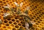 Mortalidade das colmeias está em queda na UE