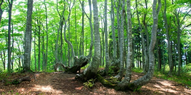 Acréscimo alerta para declínio do peso da floresta na economia nacional