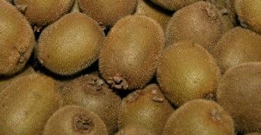 Produtos da Sapec Agro obtêm autorizações para usos menores