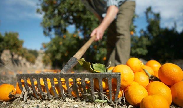 Pequenos agricultores podem ficar isentos de IRS e Segurança Social