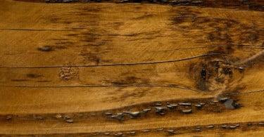 Criado tratamento preventivo contra as térmitas da madeira