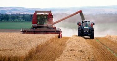 Previsões apontam para aumento da produção mundial de cereais em 2013
