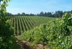 Vinhos Verdes apoiam Comissão Europeia no plano de acabar com regime dos direitos de plantação