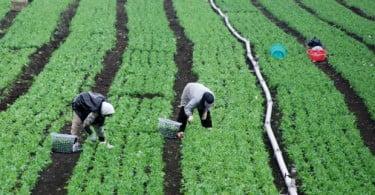 trabalhadores agrícolas