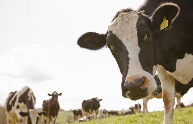 Ministério vai antecipar pagamento das ajudas ligadas ao leite