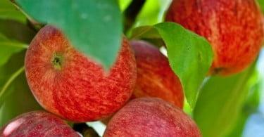 Bom ano para as frutícolas