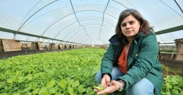 Ana Ferreira helicicultura
