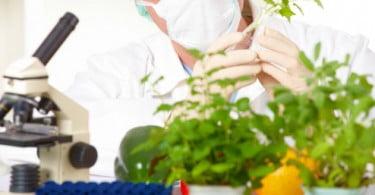 CiB: é ilegal a proibição do cultivo de plantas transgénicas