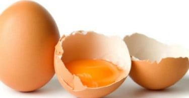 Países do norte de África preparam-se para exportar ovos