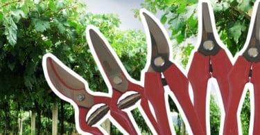 Agriloja lança gama de tesouras de vindima