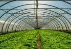Ministério da Agricultura estima que prejuízos relacionados com a Leslie cheguem aos 29,8 M€