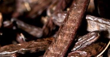 Universidade do Algarve produz bioetanol a partir de alfarroba