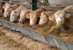 Ministro do Ambiente defende redução da produção de bovinos entre 25 a 50%