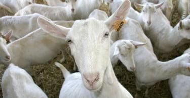 Eurogrupo quer aplicar legislação de bem-estar animal ao Mercosul