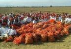 Caloiros da Universidade Católica colhem batatas no Ribatejo