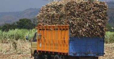 Portugal quer importação de cana-de-açúcar a taxa zero