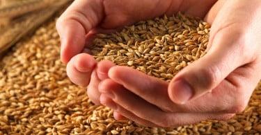 Preços dos cereais devem continuar a subir