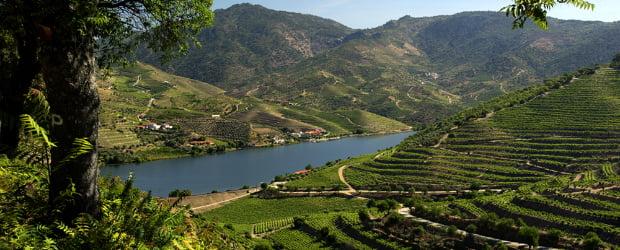 Fim da transferência de direitos de replantação para o Douro