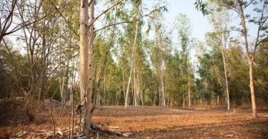 floresta setembro de  Vida Rural