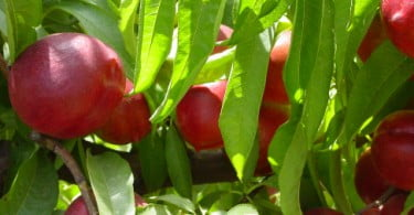 Plataforma de comércio agrícola em criação