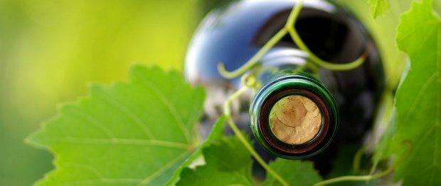 Quebra de 25% na produção de vinho