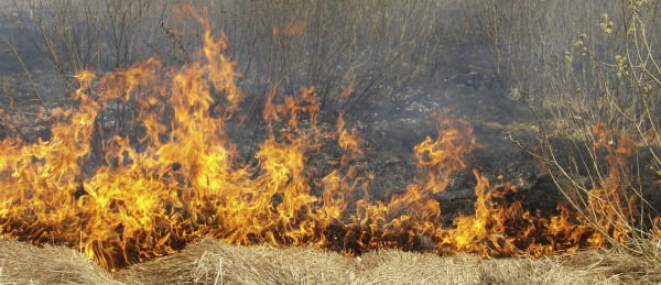 Redução de risco de incêndios só é possível com maior combate às alterações climáticas