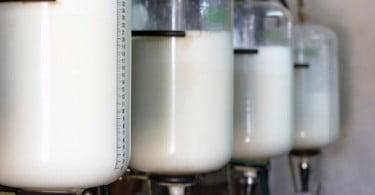 Irlandeses querem aumentar produção de leite em 50%