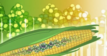 Transgénicos reduzem impacto nocivo da agricultura