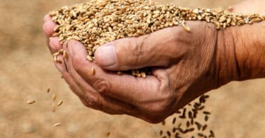 Rússia prolonga embargo sobre exportações de cereais