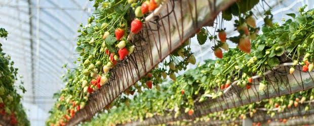 Agricultor português é o mais inovador da Europa