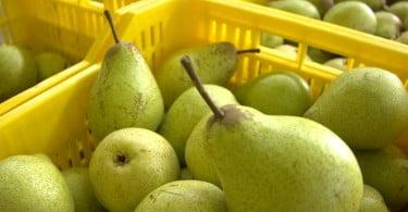 Ozono pode prevenir deterioração de hortofrutícolas